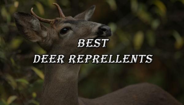Best Deer Repellents